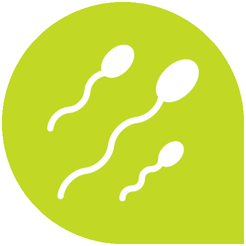 Pregnancy calculator by date of conception